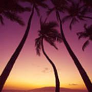 Maui Palms Art Print