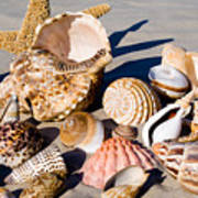 Mix Group Of Seashells Art Print
