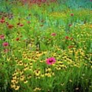 Mixed Wildflowers In Bloom Art Print
