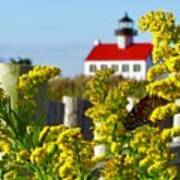 Monarch At East Point Light Art Print