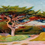 Monterey Cypress Art Print