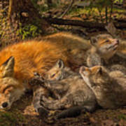 Mother Fox And Her Kits Art Print
