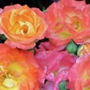 Multi-color Roses Art Print