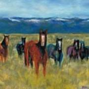 Mustangs In Southern Colorado Art Print