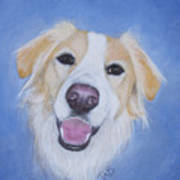 My Blonde Border Collie Art Print