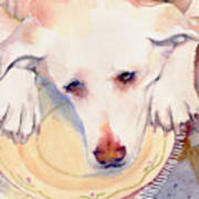 Old Dogs Are The Best Art Print