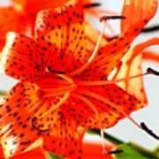 Orange Glow Art Print