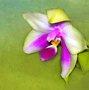 Shy Orchid  Art Print