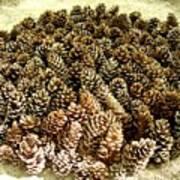 Organize Pinecones Art Print