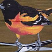 Oriole 2 Art Print