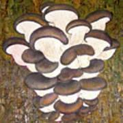 Oyster Mushroom Art Print