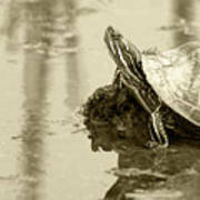 Painted Turtle On Mud In A Marsh Art Print