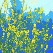 Palo Verde Spring Art Print
