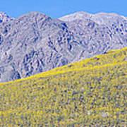 Panoramic View Of Desert Gold Yellow Art Print