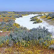 Panoramic View Of White Salt And Desert Art Print