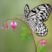 Paper Kite Butterfly Print by Thanh Thuy Nguyen