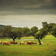 Pasturing Cows Art Print