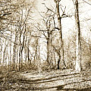 Path In A Forest Art Print