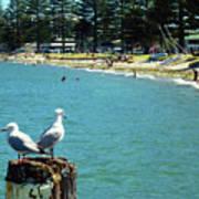 Pilot Bay Beach 4 - Mount Maunganui Tauranga New Zealand Art Print