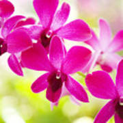 Pink Orchid Lei Art Print