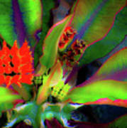 Plants And Flowers In Hawaii Art Print