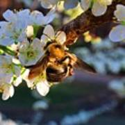 Plum Full Of Bees Art Print