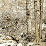 Pocono Mountain Stream, Pennsylvania, Digital Art Art Print