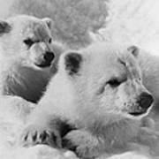 Polar Bear Cubs Art Print
