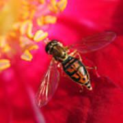Pollen Feast Art Print