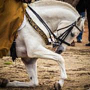 Portugal Lusitano Horse Art Print
