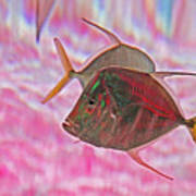 Pretty Fishy, Fish, 6, Multi-color, Pink Backgroun7 Art Print