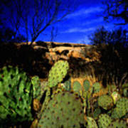 Prickly Pears Enchanted Rock Texas Art Print