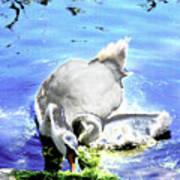 Psychedelic Mute Swan And Cygnet Feeding Art Print