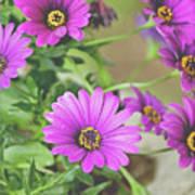 Purple Aster Flowers Art Print