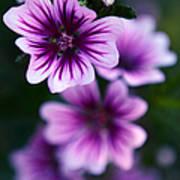 Purple Beauties Art Print
