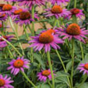 Purple Blooms Art Print