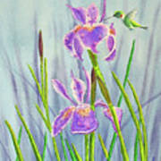 Purple Dutch Iris And Hummer Art Print