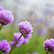 Purple Spring 7 Art Print