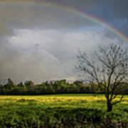 Rainbow Fields Art Print