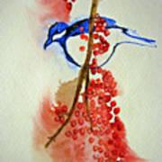 Red Berry Blue Bird Art Print