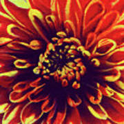 Red Flower 92 Art Print