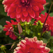 Red Flower Close Up Art Print