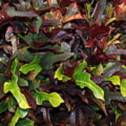 Red Green  Leaves Art Print