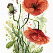 Red Poppies Watercolor Art Print