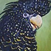 Red Tailed Black Cockatoo  Art Print