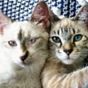 Rescued And Spoiled Art Print