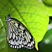 Rice Paper Butterfly 6 Art Print