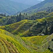 Rice Terraces In Guilin, China  Art Print