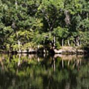 River In The Jungle Art Print