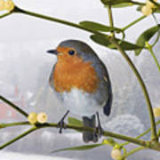 Robin On Mistletoe Art Print